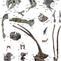 Tüskékkel védte volna magát a hosszúnyakú dinoszaurusz?