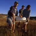 Egy bizarr ősemlős csaknem teljes csontváza került elő Madagaszkárról