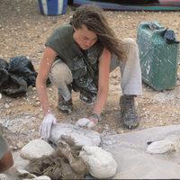 Élettől nyüzsgő tenger hullámzott a Szahara helyén