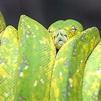 A szárazföldön fejlődhettek ki a kígyók