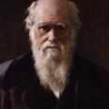 Darwin-nap