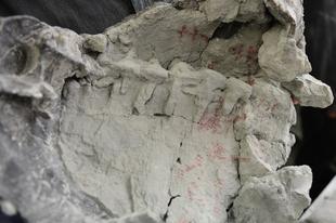 Rekordidős teknőspáncélt találtak