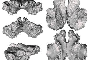 A T. rex rokonának maradványaira bukkantak Új-Mexikóban