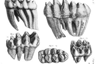 A híres amerikai ősormányos újabb faját írták le