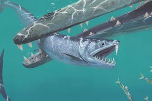 Kardfogú óriás szardellák népesítették be a tengereket 45 millió éve