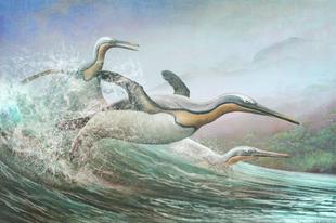 Pingvin-mímelő ősmadarak népesítették be az északi féltekét