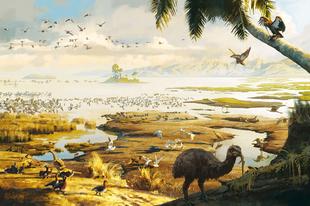 Hatalmasra nőhettek meg Új-Zéland óriáspapagájai