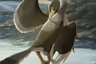 Mégis tudott repülni az Archaeopteryx?