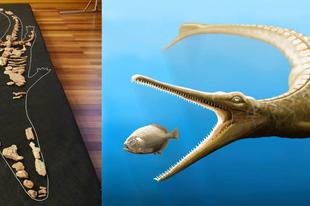 Magyarosuchus fitosi - Sajtótájékoztató