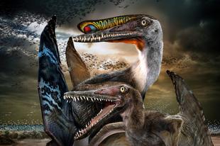 Kikelésük után rögtön szárnyra kaphattak a pteroszauruszok