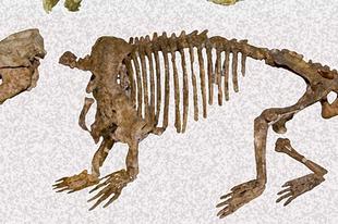 Előkerült egy fura emlős