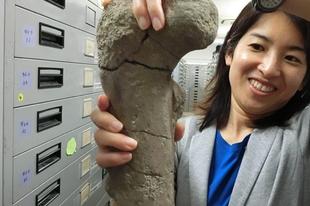 """Rájöttek, milyen őslény volt a """"dinoszaurusz-csont"""" valódi gazdája"""