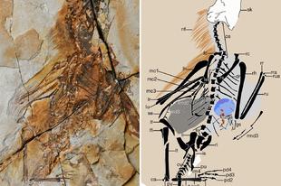 Újabb taggal bővült a bőrszárnyú dinoszauruszok családja