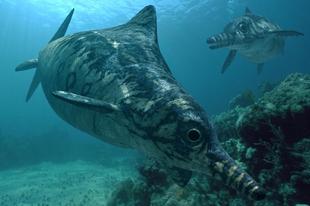 Mit üzen nekünk India új Ichthyosauria lelete?