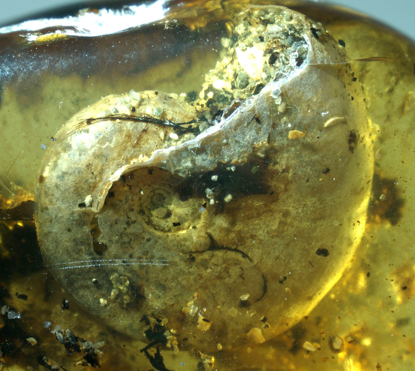 01-amber-200433.jpg