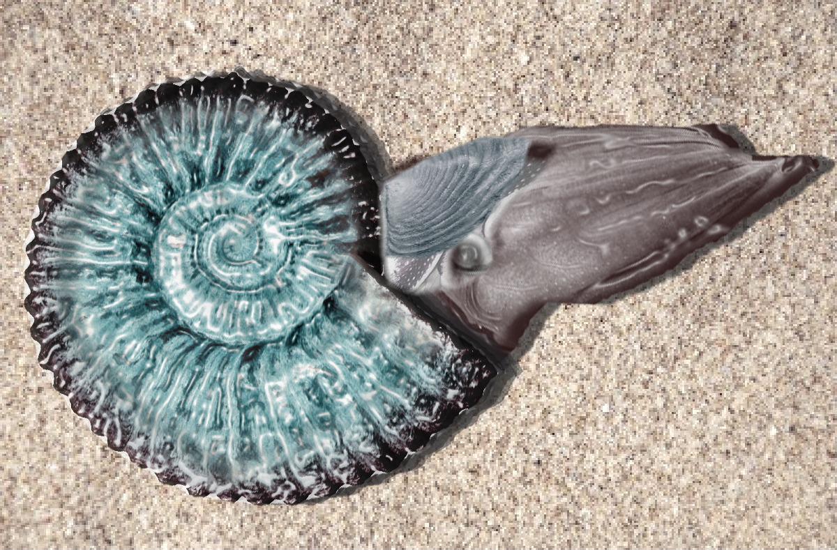 20130930214124_ammonite_digital_reconstruction.jpg