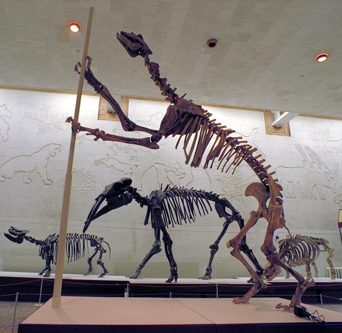 chalicotherium.jpg