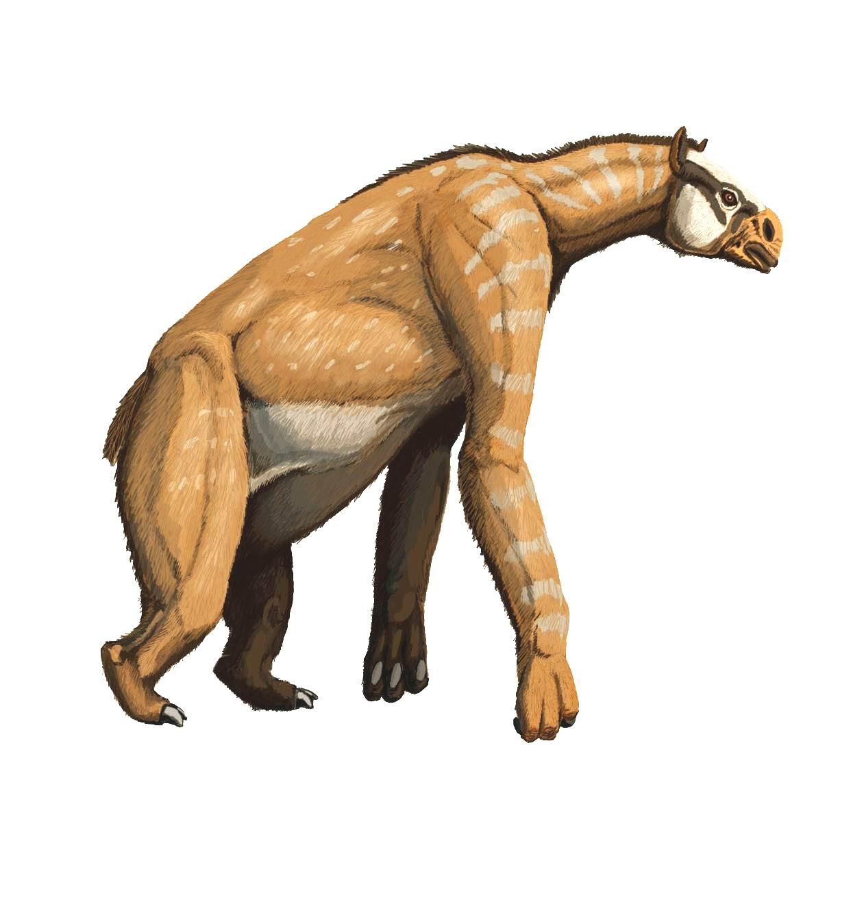 chalicotheriumdb1222.jpg