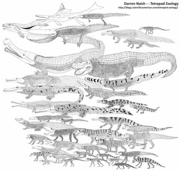 crocodilomorph_montage.jpg