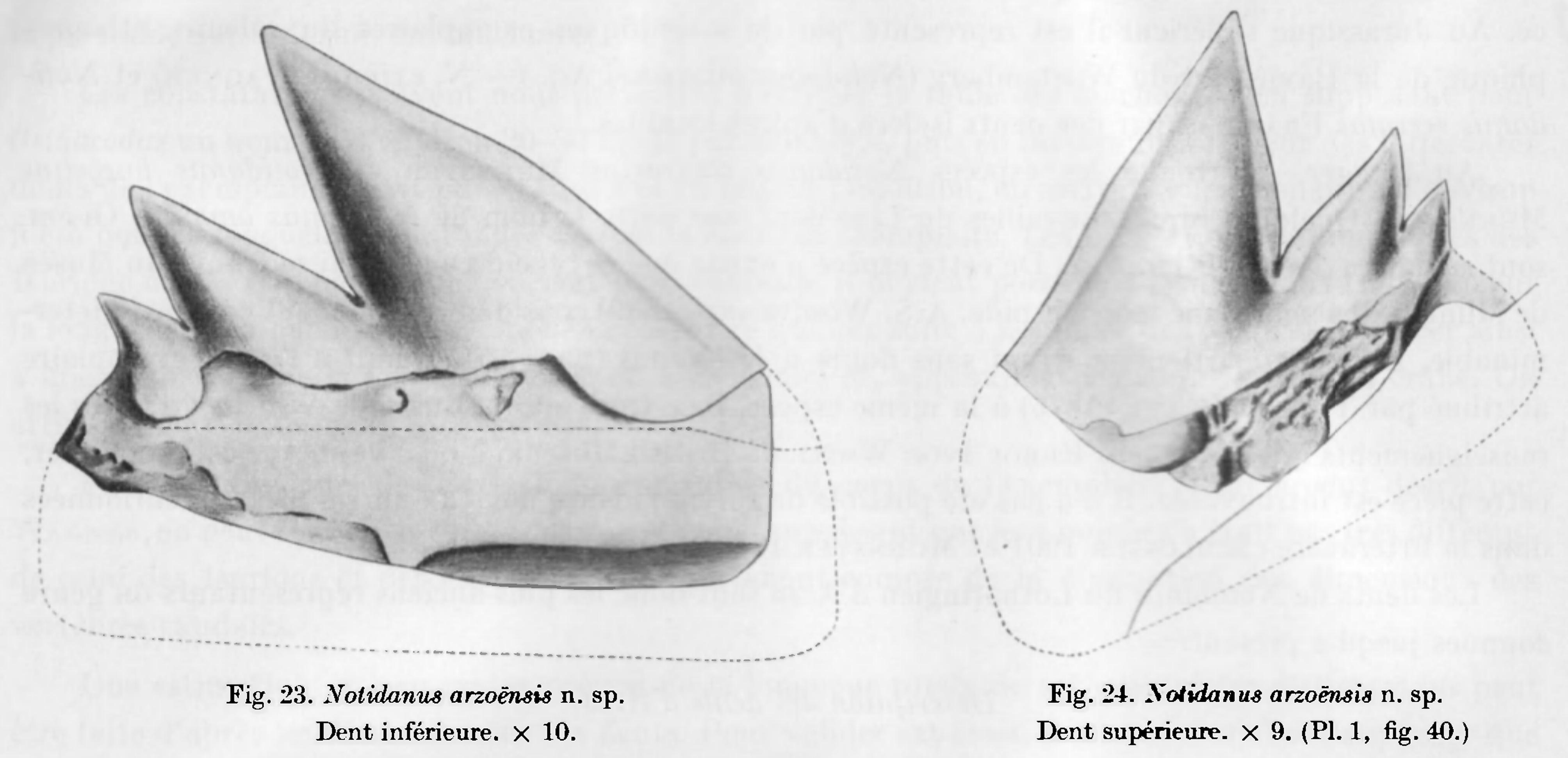hexanchus_arzoensis.jpg