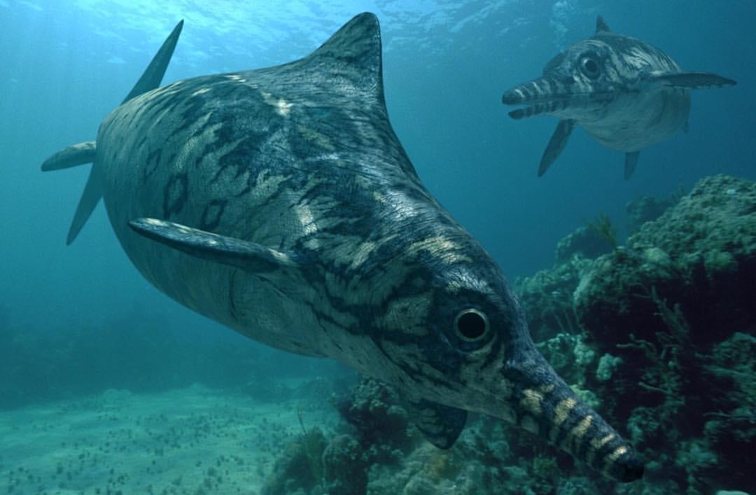 ichthyo_ophthalmosauridae_4cygo0000f41000.jpg