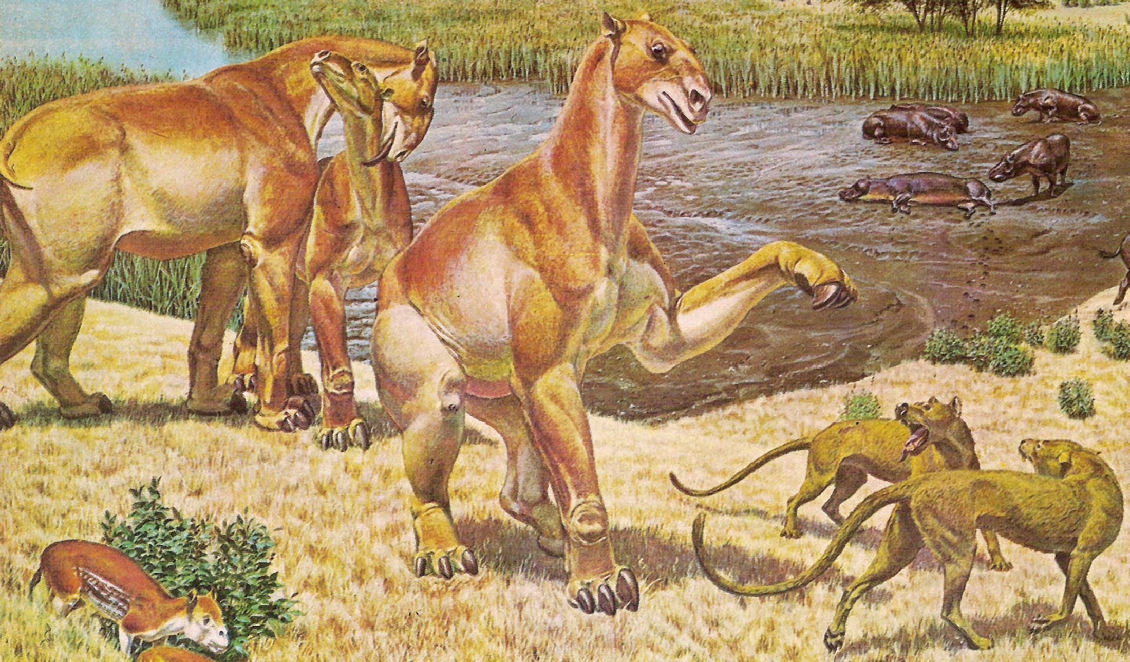 moropus_and_daphoenus.jpg