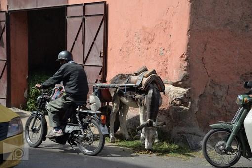 marrakesh_85.JPG