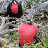 Galápagos-szigetek I: Még pont paradicsom