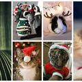A legcukibb Karácsonyi állatok