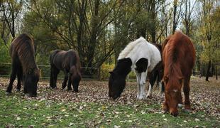 Különleges lovas élmény Magyarországon!