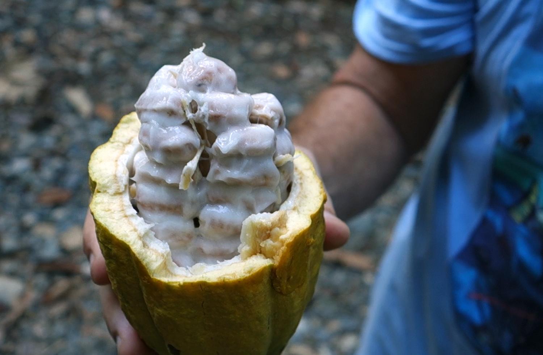 cacao-pod.jpg