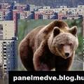 Üdvözlünk a Panelmedve blogon!