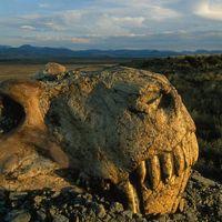 A perm végi kihalás 60.000 év alatt zajlott le!