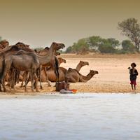Végül kiszárad a Csád-tó is?