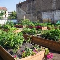 Közösségi kertek évszázada
