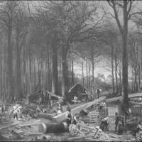 Elfüstölt erdőink