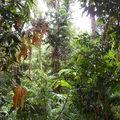 A legősibb esőerdő