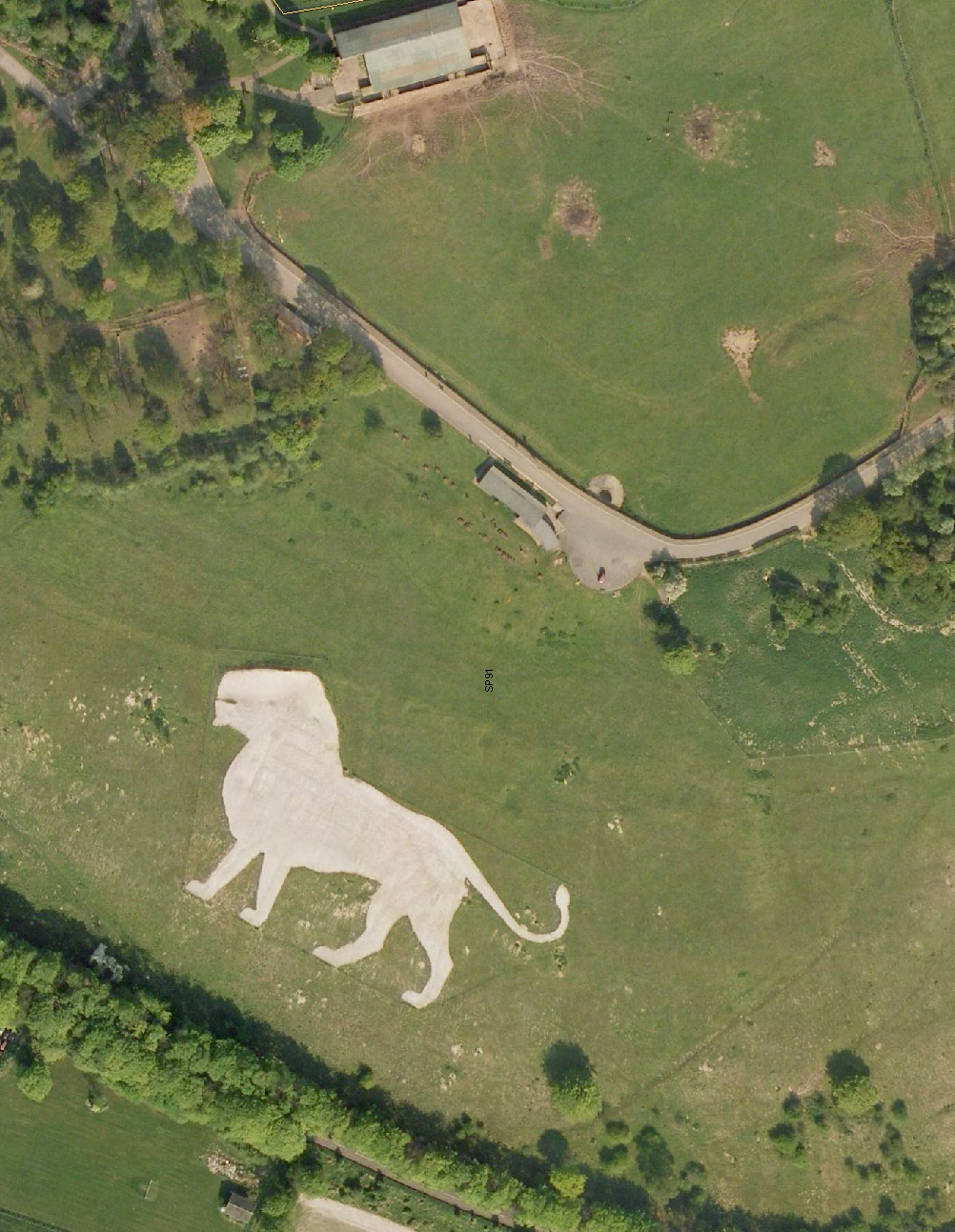 1white lion.jpg