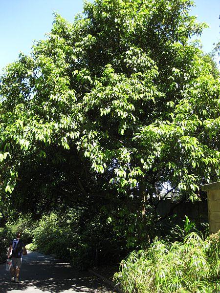 450px-gardenology_org-img_0431_rbgs10dec.jpg