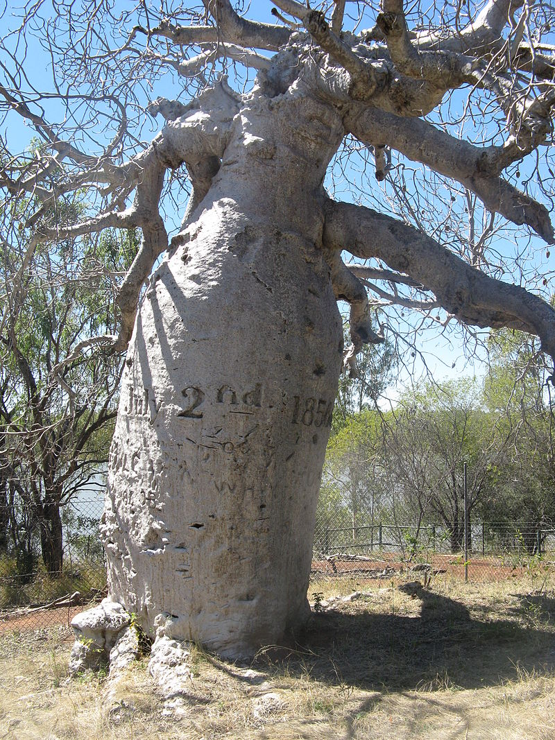 800px-gregory_tree.JPG