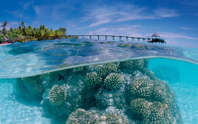 Tuamotu 1272002766_1440x900_fakarava-atoll-in-the-tuamotu-archipelago.jpg