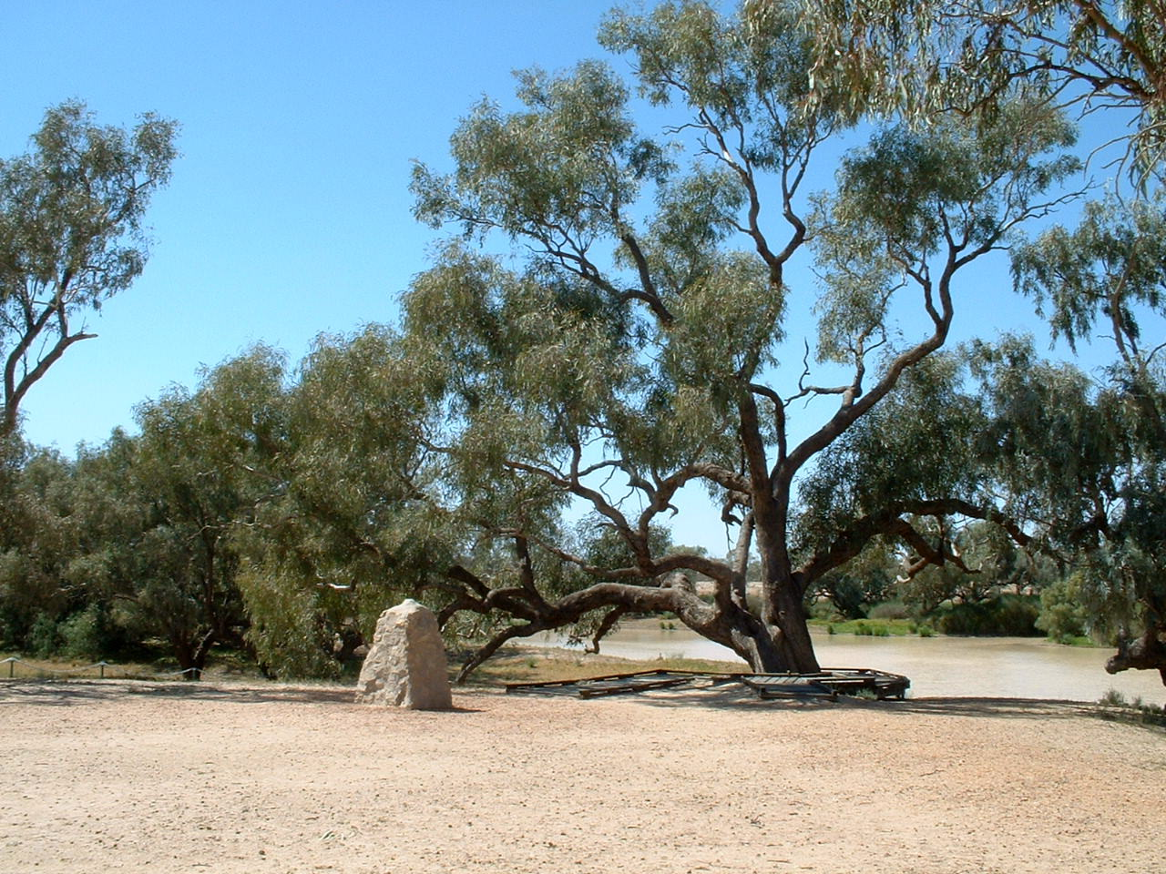 burke_and_wills_dig_tree_2.JPG
