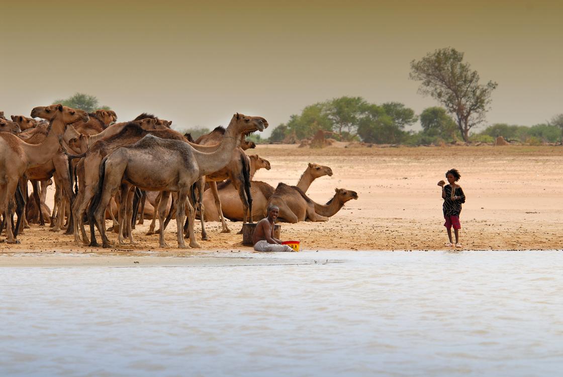 caravane-sur-les-rives-du-lac-tchad_2008.jpg