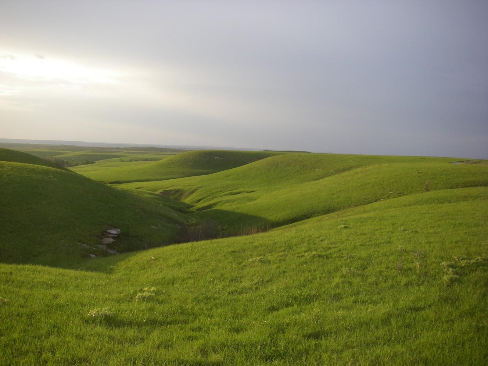fig1_konza_grass.JPG