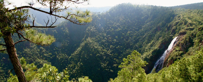 mountain-pine-ridge-belize-6_0.jpeg