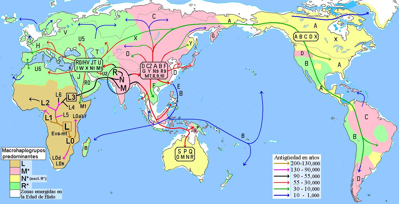 migraciones_humanas_en_haplogrupos_mitocondriales.PNG