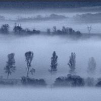 G. Tamás - Ködös reggel