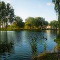 Locsmandi Szabolcs - Ibolya tó