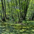 Fekete tó - Tóth Roland