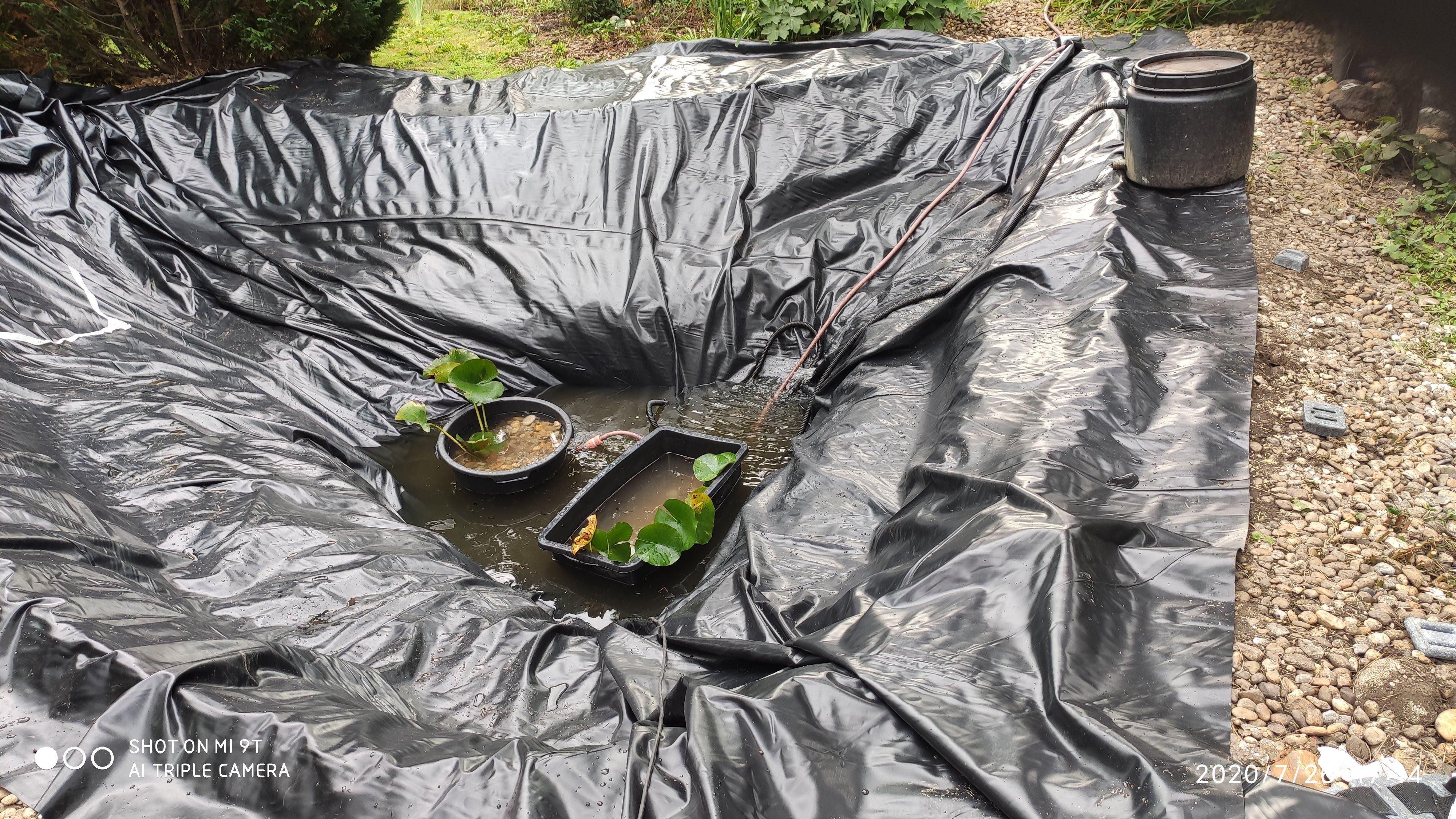 Fólia kisimítva, ránctalanítva, amennyire lehetséges. Bekerülnek az első tavirózsák, dézsában. Pici víz, tószűrő máris indítva.